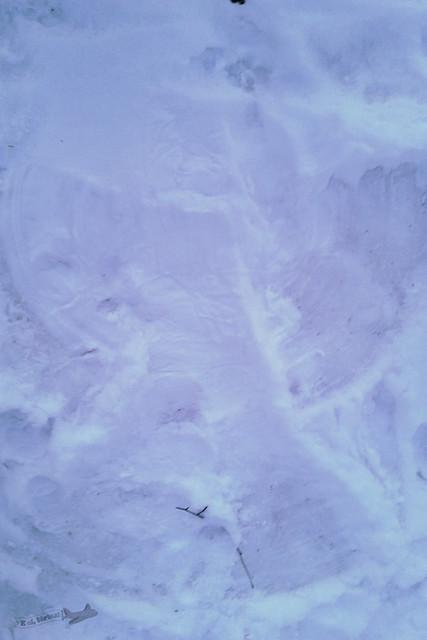 Central Park com neve