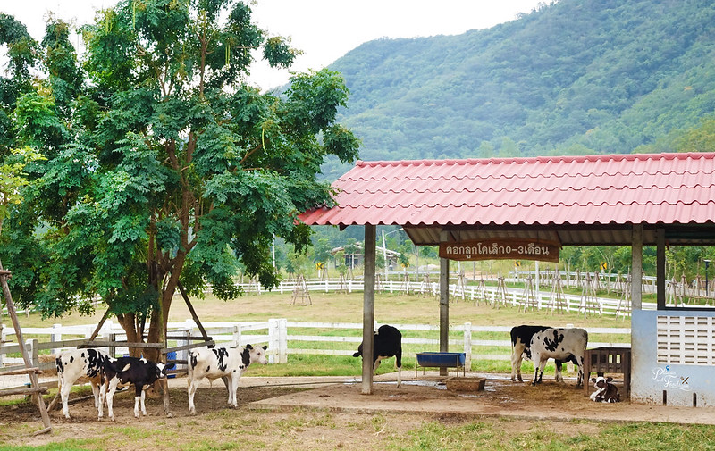 Chang Hua Man Royal Project dairy farm