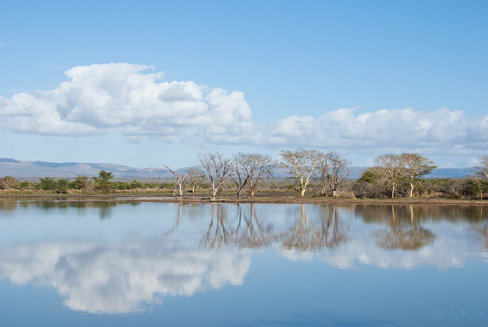 Mirror, Lake, uMkhuze, Game, Reserve, South, Africa, Kaido Rummel