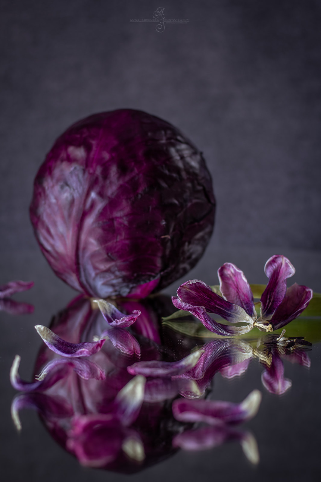 Punakaalia & kuivuneita tulppaanin terälehtiä / Red cabbage & dried tulip petals