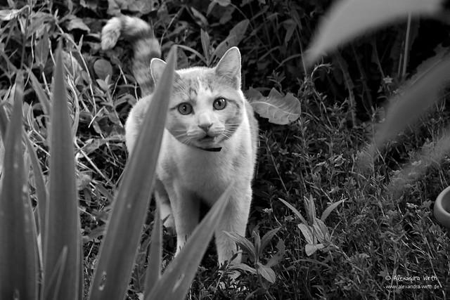 Krümel im Garten