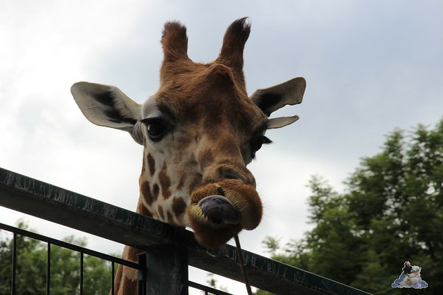 Tierpark Berlin 24.06.2014  155