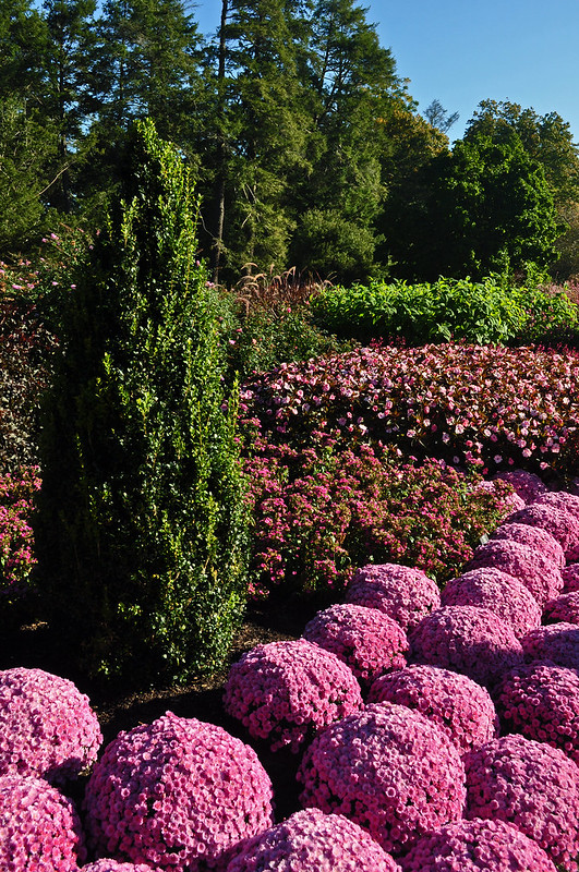 Longwood Flower Garden Walk (1)