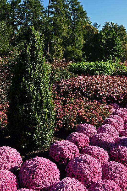 Longwood Flower Garden Walk (1)