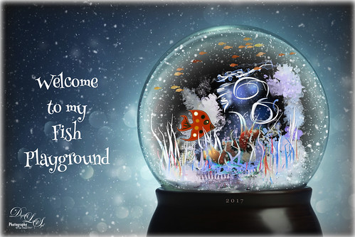 Image of fish in a snow globe
