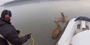 Man Saves Deer From Frozen Lake