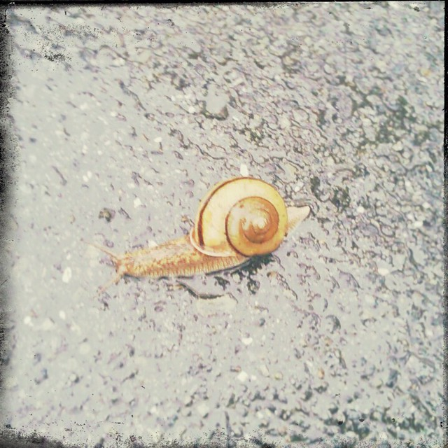 Snail on the street