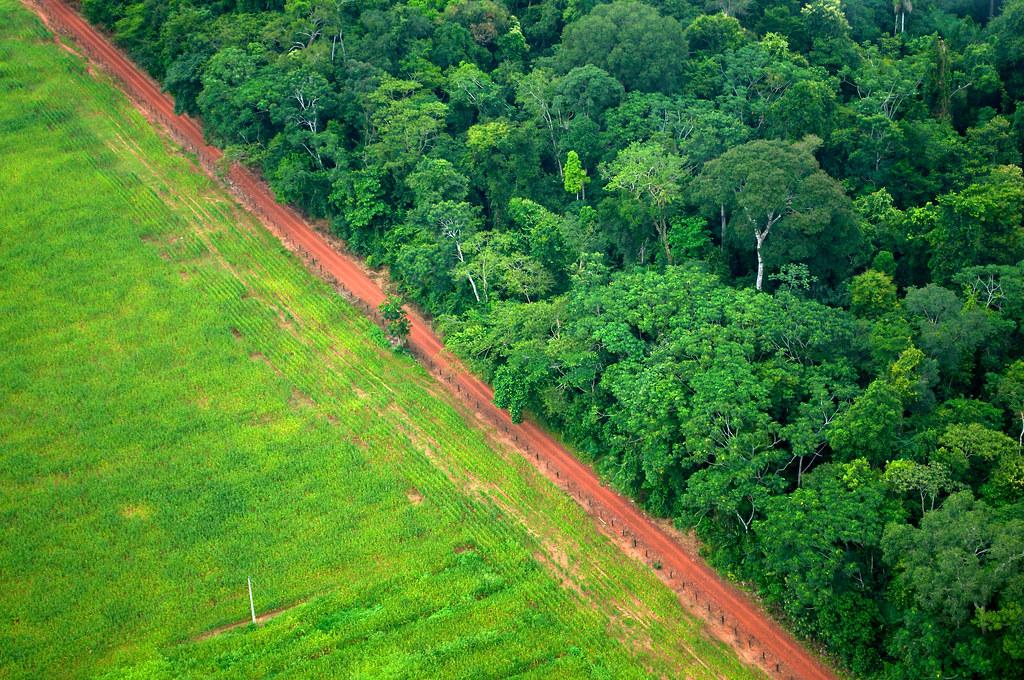 巴西森林砍伐 。作者:Kate Evans;圖片來源:CIFOR(CC BY-NC 2.0)