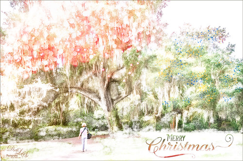 Image of the Harry P. Leu Gardens in Orlando, Florida, with a wintry feel
