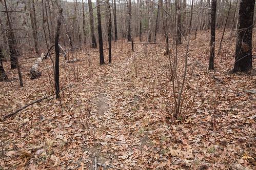 Path to Upper Grassy Creek Falls - 4