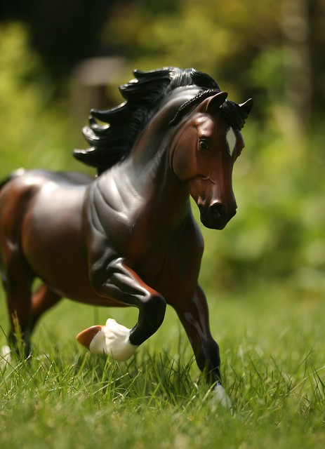 EA Fantastic Mr Copperfox - Welsh Cob - stallion - OF - EG6