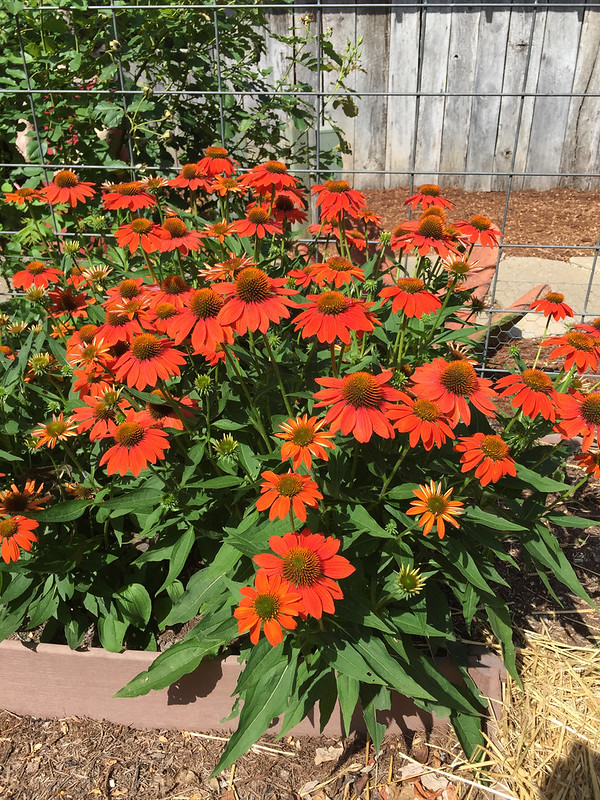 Sombrero Adobe Orange