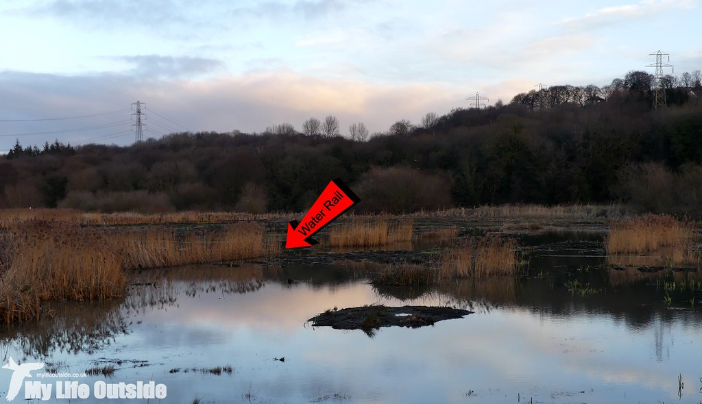 P1060299 - Rodley Nature Reserve, Leeds