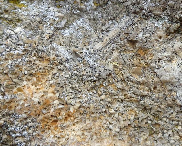 Crinoid limestone (detail)