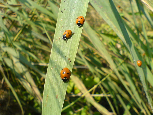 Image Result For Ladybirds