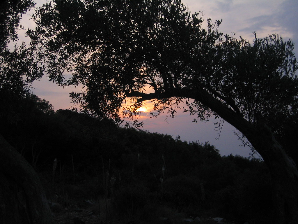Olive tree sunset | by Darren Waters