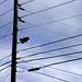 DSC05278-wires