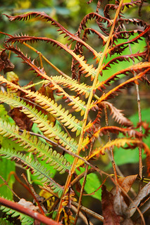 Fern frond | by Computer Science Geek