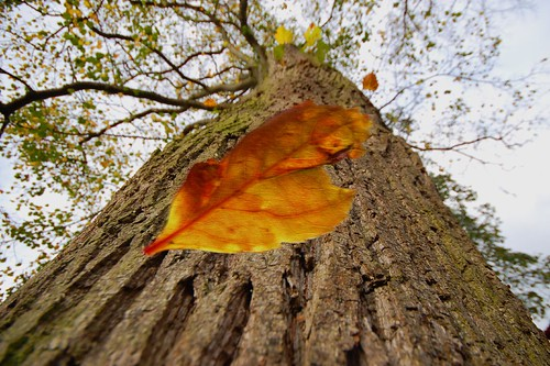 falling leaves | by Mark Twells
