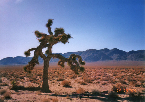 The Joshua Tree (U2) | by Matt McGee