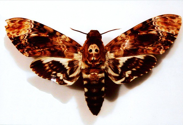 an argument of the moth significance in the death of the moth and death of a moth Answer to in the death of the moth, how does the author view the struggle between life and death.