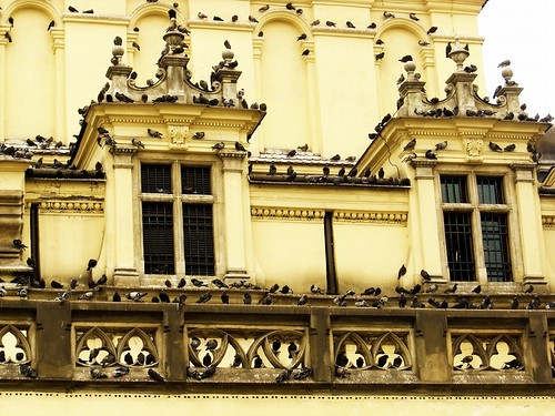 doves everywhere | by totu