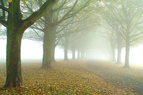 The  avenue in the fog | by algo