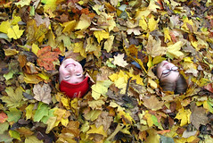 Kids in Leaves | by Dan Zen
