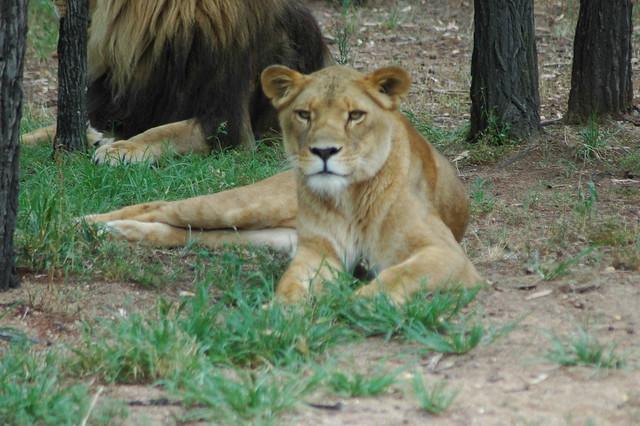 dubbo 39 s zoo 25 le zoo de dubbo western plains zoo www flickr photo sharing. Black Bedroom Furniture Sets. Home Design Ideas