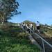 Grandview Park - Stairs