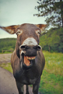Laughing Donkey | by jaxxon
