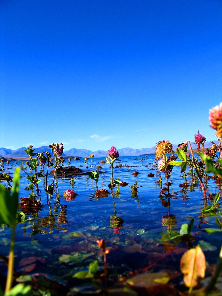 Water Flower Love Lake Tekapo Flowers Karen Rubado