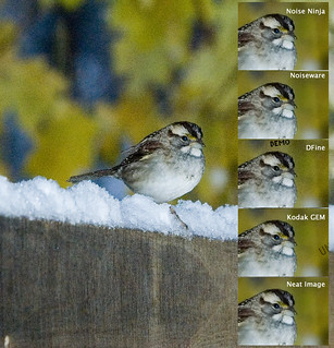 5-Way Noise Reduction Test II: Watch the Birdy | by martytdx