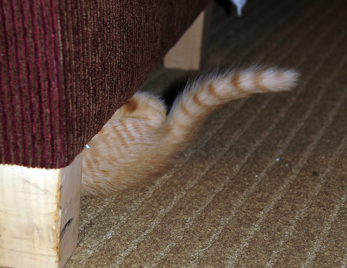blogpaws-kittensC01660