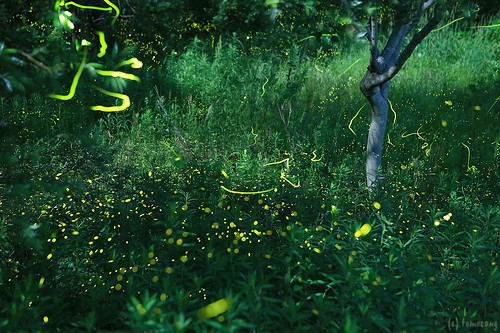 Firefly 2015 (Munakata)