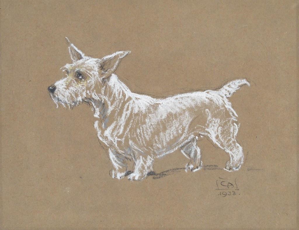 Cecil Charles Windsor Aldin 1870 1935 A Sealyham Terrier