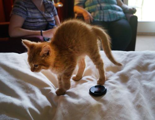 blogpaws-kittensC01578