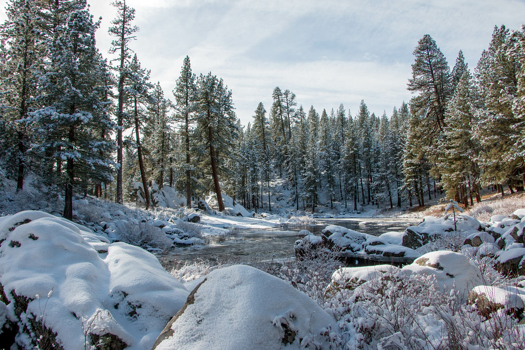 12.25. Plumas National Forest. Feather River