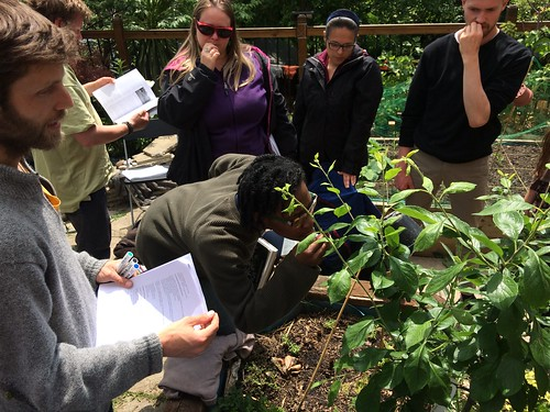 Learning in the garden on a PDC