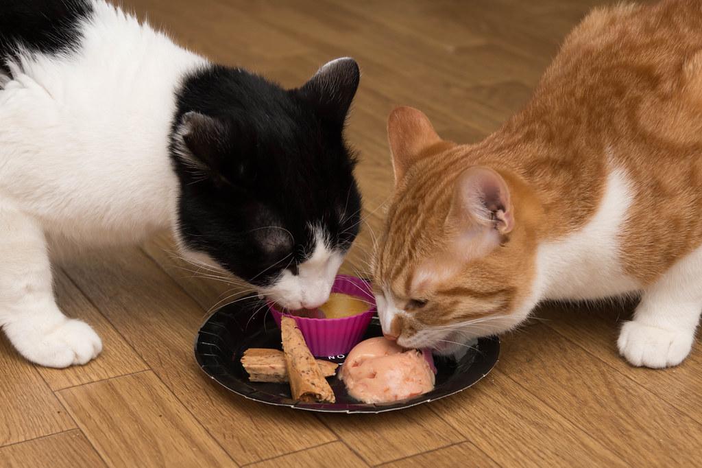 猫の日特別ディナー