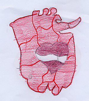 foto 12 disegno cuore e polmone del capretto Gi
