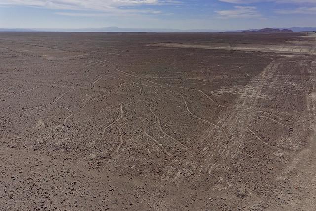 Linie Nazca - Drzewo