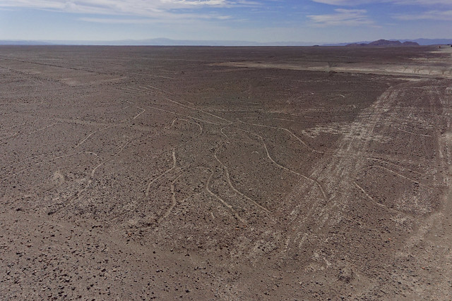 Nazca Lines - Tree