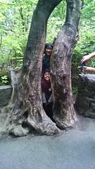 Inna Tree