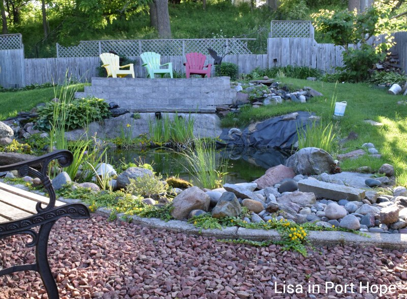 Backyard pond June 26 2015