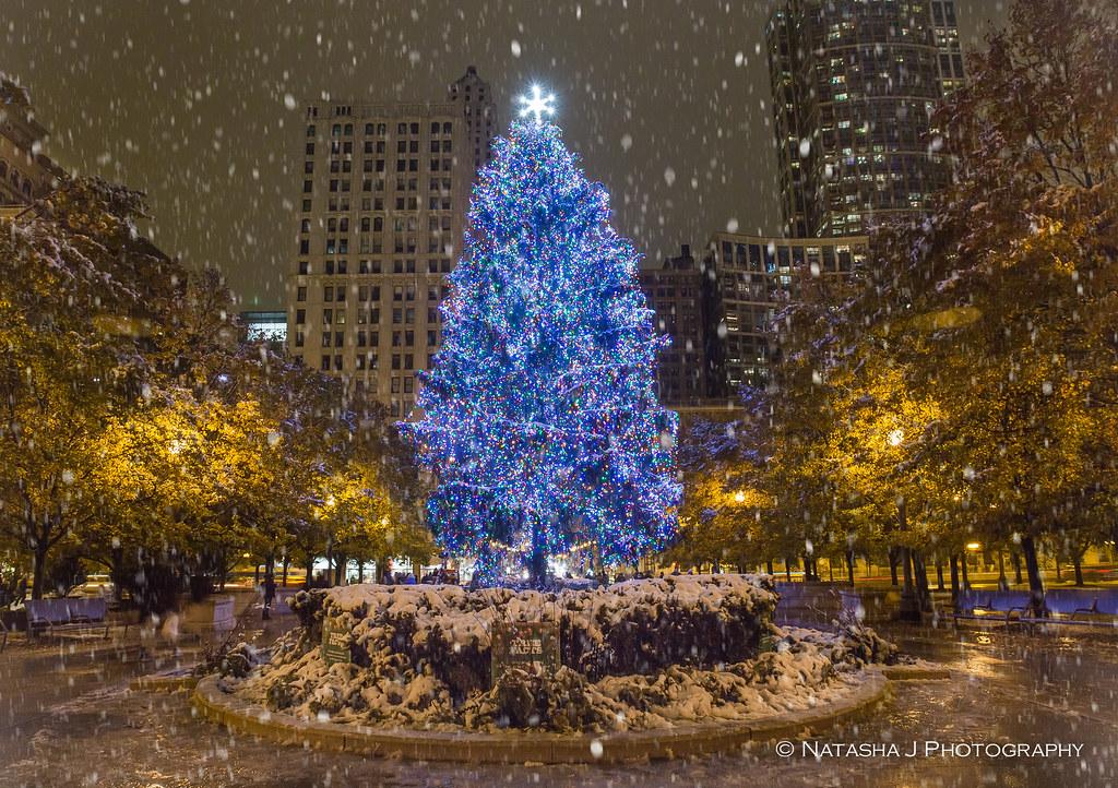 christmas tree in chicago by natasha j photography - Chicago Christmas Tree