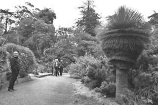 SF Botanical Garden - Xanthorhoea