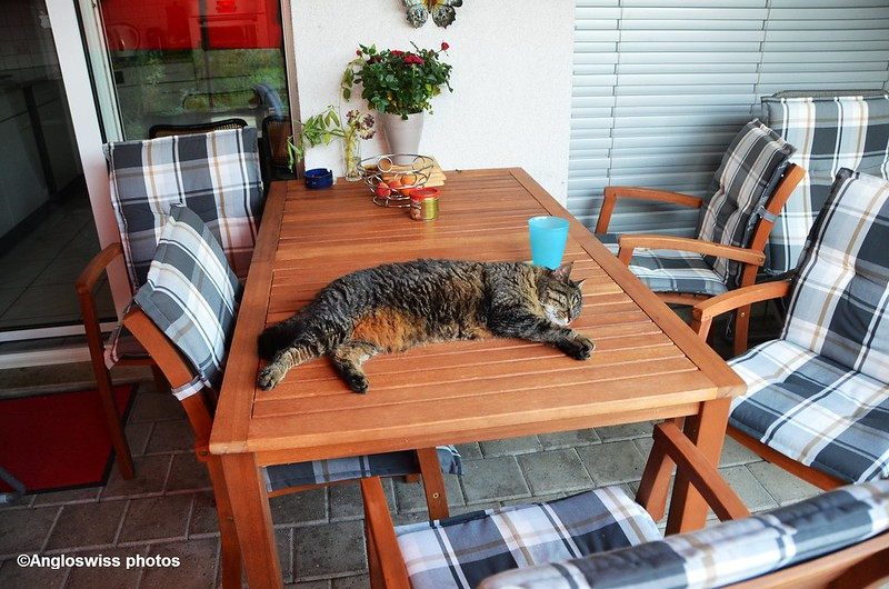 Tabby relaxing on the porch on the table 2