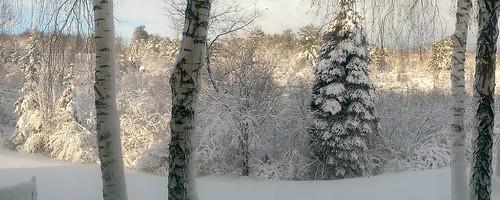 Hibernal Augusta