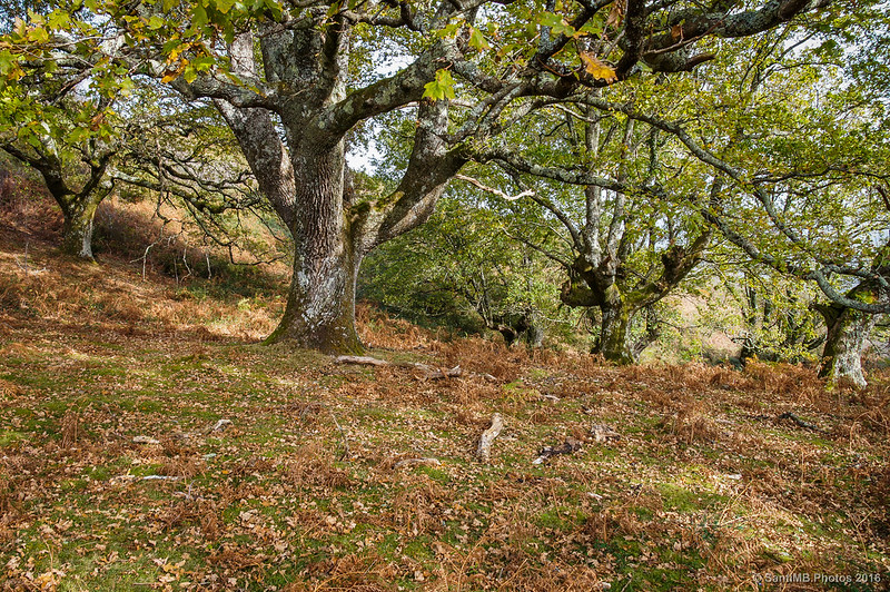 Robles cerca de la cima del monte Azkar